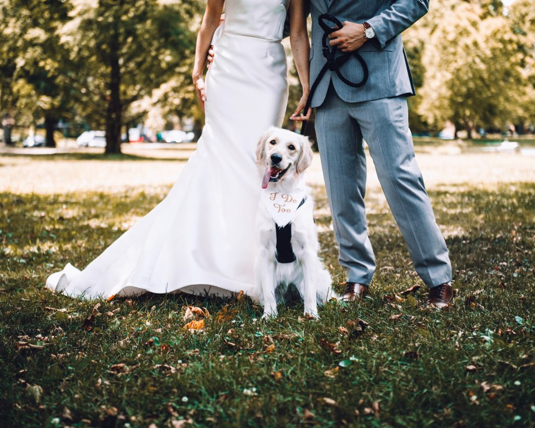 Bride and Groom with Dogs wearing wedding sign